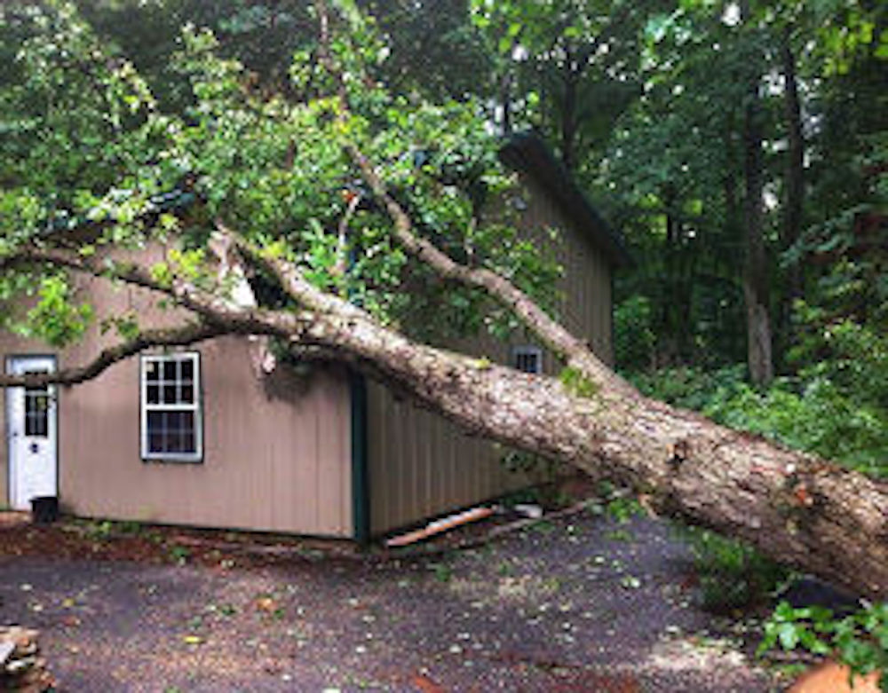cherry-hill-emergency-tree-removal-services
