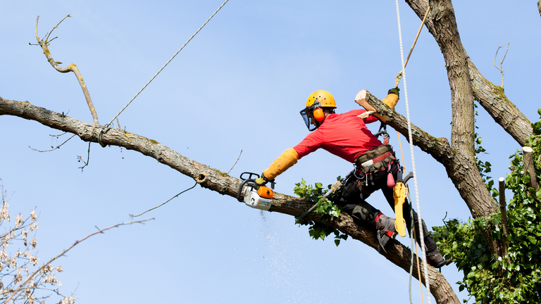 cherry-hill-tree-pruning-services