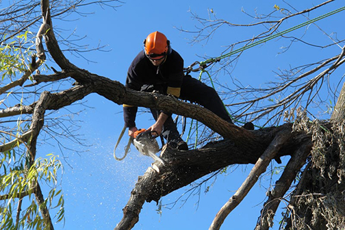 franklin-nj-tree-removal-services