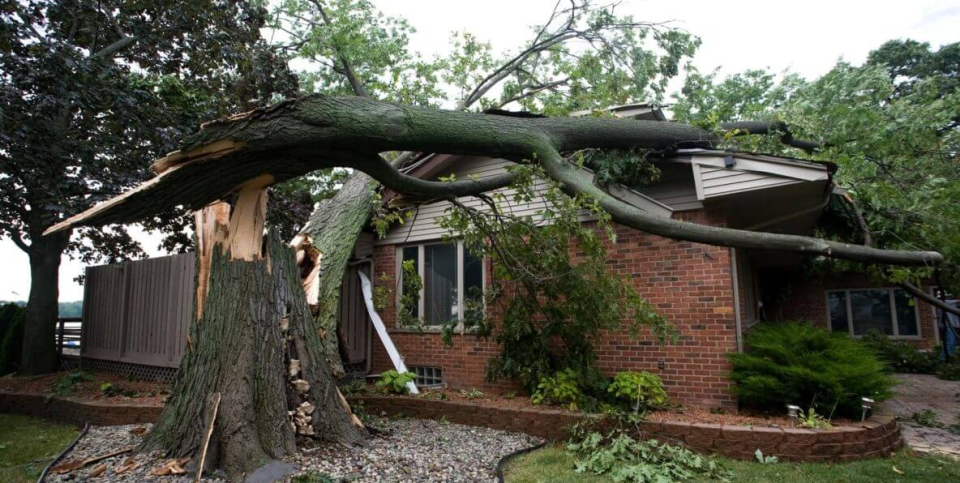 sewell-emergency-tree-removal-services