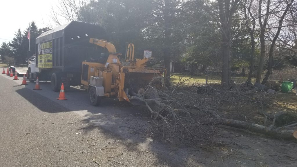 tree-removal-service-in-Cherry-Hill-NJ