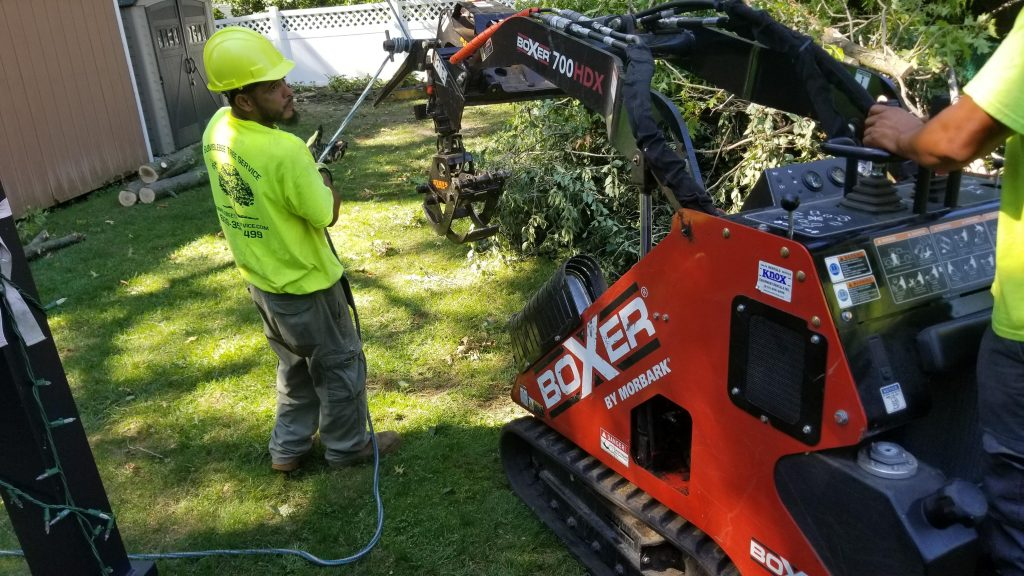 tree-removal-service-in-Haddonfield-NJ