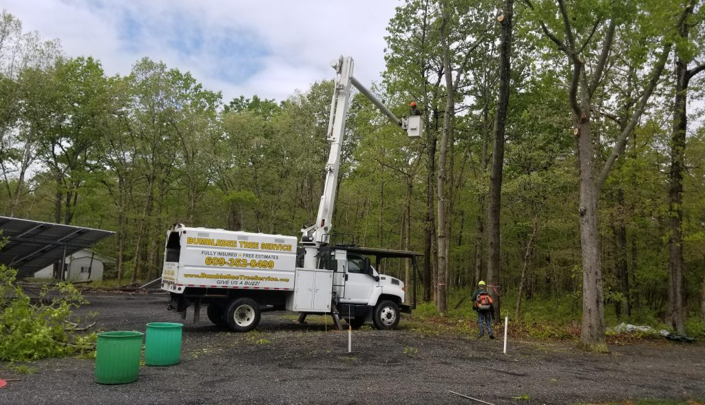 tree-removal-service-in-Paulsboro-NJ