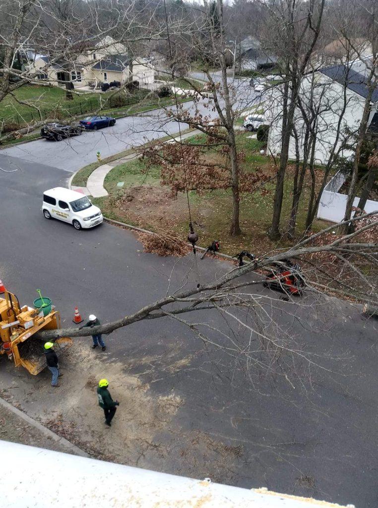 tree-removal-service-in-Pitman-NJ